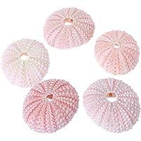 KINTRADE - Piccola Conchiglia di Marino Rosa Naturale, Decorazione da Spiaggia, Decorazione per Matrimoni, Decorazione costiera per la casa in Miniatura