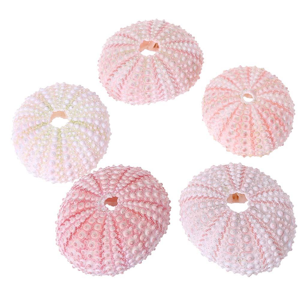 Itlovely Air Plants Sea Urchin Tabletop Tillandsia Holder Miniature Gardening Decorations