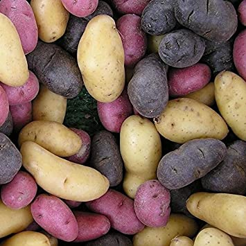 Organic Fingerling Potatoes Mixed Colors!