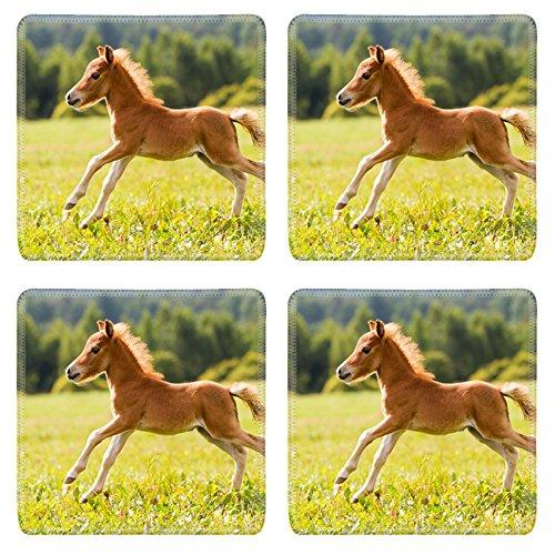 liili-square-coasters-image-id-15217589-foal-mini-horse-falabella