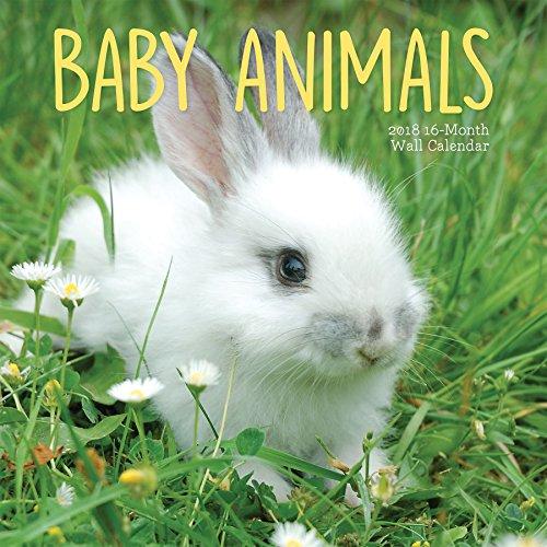 Avalon 2018 Baby Animals Wall Calendar,  16 Month Calendar, 12 x 12 inches (83038)