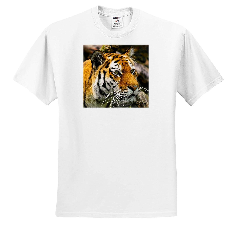 T-Shirts Close Up View of Wild Tiger Asia Animal Wildlife 3dRose Sven Herkenrath Animal