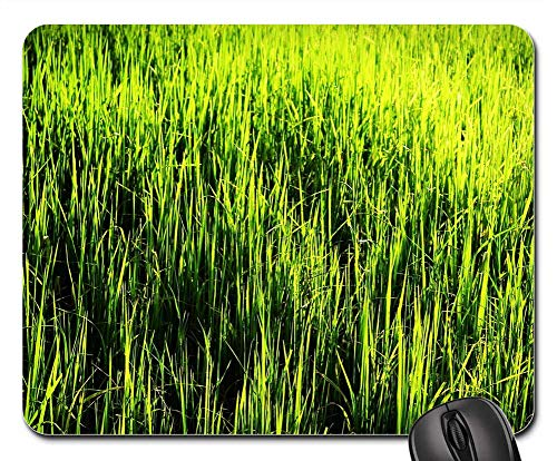 Mouse Pads - Agriculture Asia Asian Background Brown Cereal ()