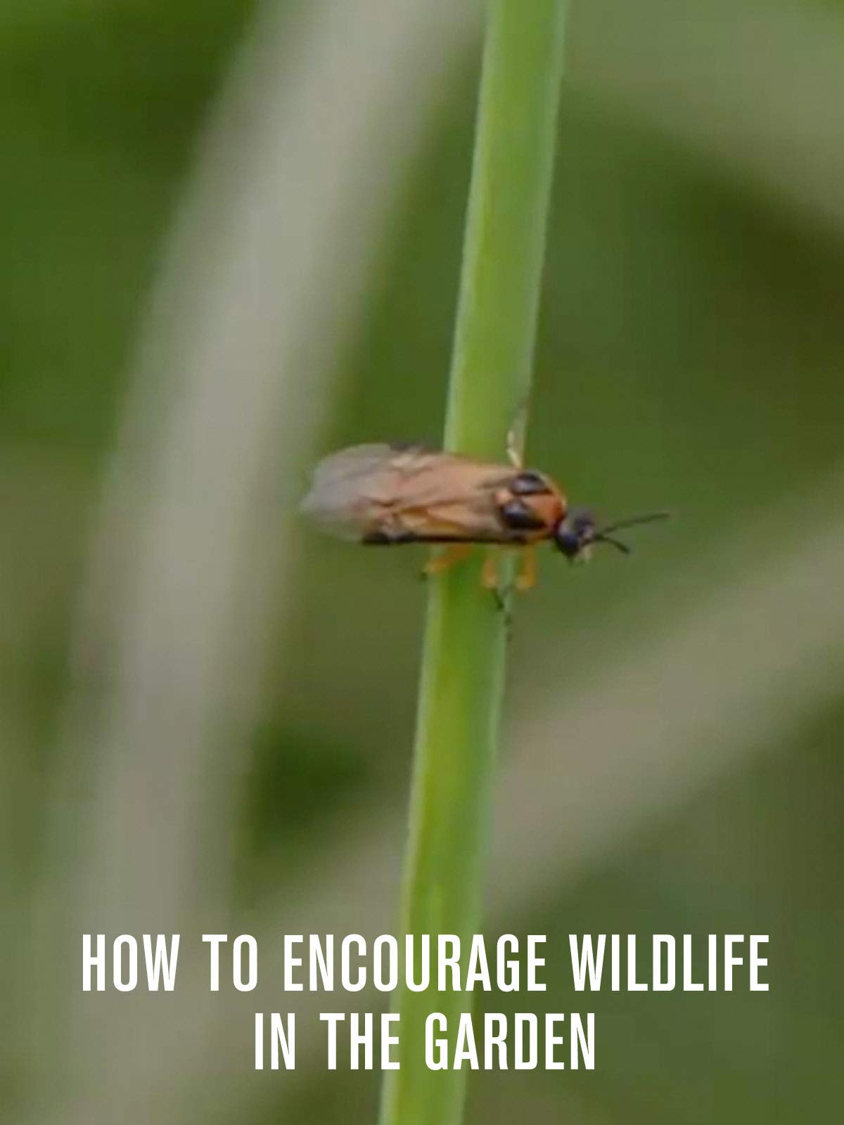 How To Encourage Wildlife In The Garden