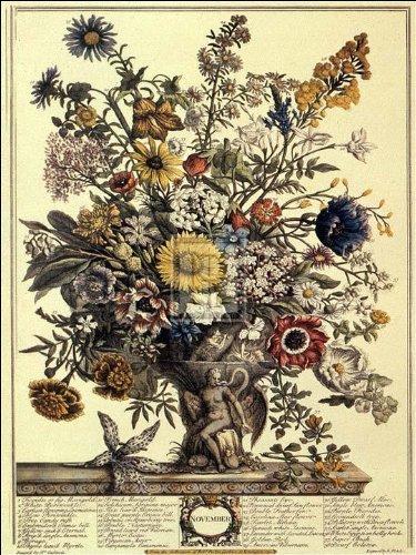 Robert Furber - Twelve Months of Flowers 1730/November (Months Flowers Of Twelve)