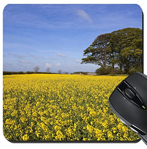 MSD Suqare Mousepad 8x8 Inch Mouse Pads/Mat design 20017214 a grove of trees growing on an ancient prehistoric burial mound surrounded by golden canola flowers under a hazy blue spr (1 Tree 2 Flower Mound)