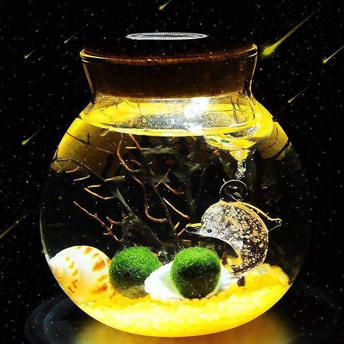 Suna LED Paisaje Ecológico Botella DIY Planta Hidropónica Oficina Creativa En Conserva Algas (Amarillo): Amazon.es: Productos para mascotas