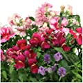 English Cottage Flower Seed Kit for Aerogarden (7-pod)