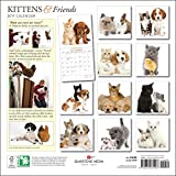 Kittens & Friends 2017 Wall Calendar