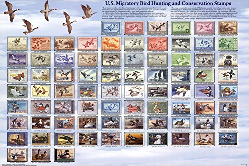 U.S. Migratory Bird Hunting and Conservation Stamps Duck Stamps Educational Poster 36 x 24in