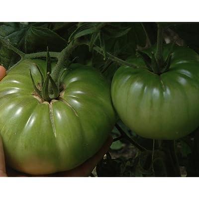 Aunt Ruby's German Green Tomato 65 Seeds-Garden Fresh! : Vegetable Plants : Garden & Outdoor