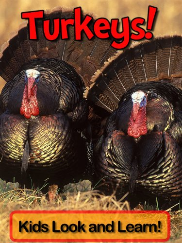 Turkeys! Learn About Turkeys and Enjoy Colorful Pictures - Look and Learn! (50+ Photos of Turkeys)