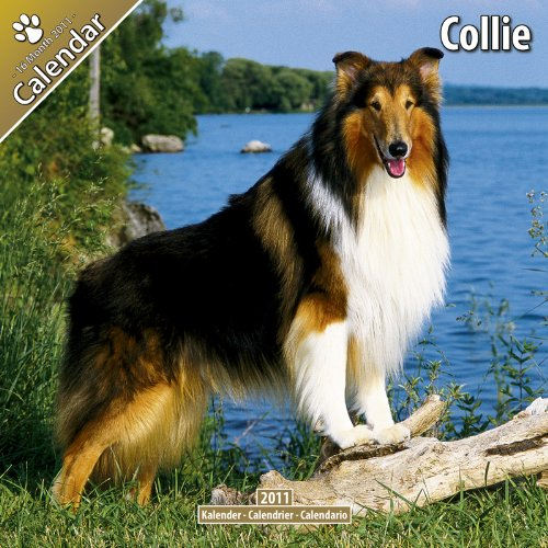 Calendar Wall Collie 2010 - Collie 2011 Wall Calendar #10030-11