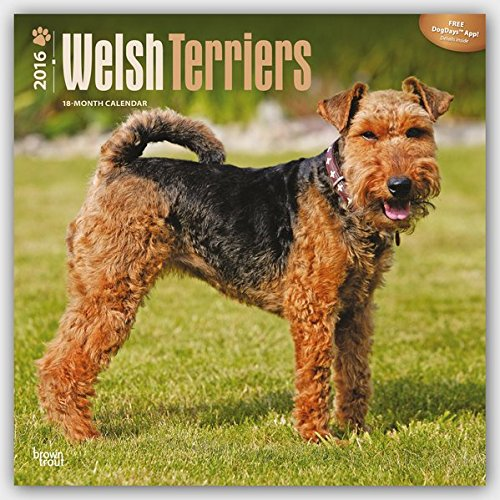 Welsh Terriers - 2016 Calendar 12 x 12in ebook