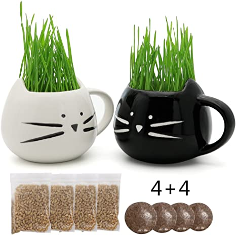 Amazon.com: teagas Cat Kit zacate con blanco y negro gato ...