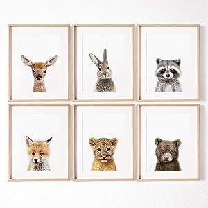 MoharWall Animal Prints Kids Art Display for Wall Nursery Decor Set of 6 Zoo Tiger Raccoon Sika Deer Brown Bear Rabbit Fox Watercolor Art Posters