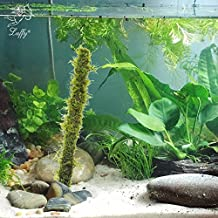 """All Natural 7"""" Bamboo Moss Stick -- Beautiful Aquatic Decor by Luffy - Safe for Freshwater Fish Tanks - Fun and Playful Aquarium Toy for Betta, Tetra, Gourami & Shrimp to Swim around & Hide"""