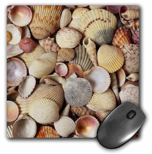 Price comparison product image 3dRose LLC 8 x 8 x 0.25 Inches Mouse Pad, Sea Shells (mp_23816_1)