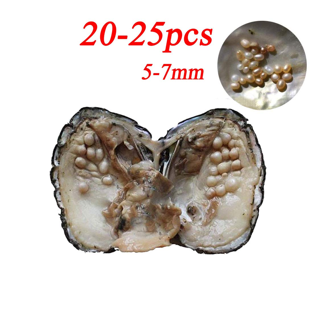 Cultured Pearls in Oysters,Cultured Freshwater Pearl Oysters with Pearls Inside Big Oyster Pearls in Oyster Anniversary Decoration for Women(5-7mm)(1 PC) by Milky Way