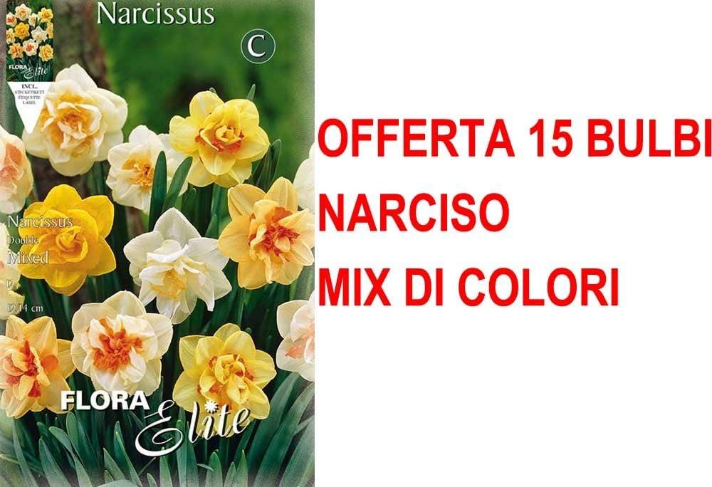 Oferta 15 bulbos Narciso Double Mix Bulbs Bulbs