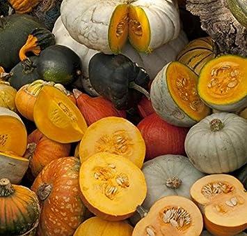 Calabaza gigante - variedad de mezcla - semillas: Amazon.es ...