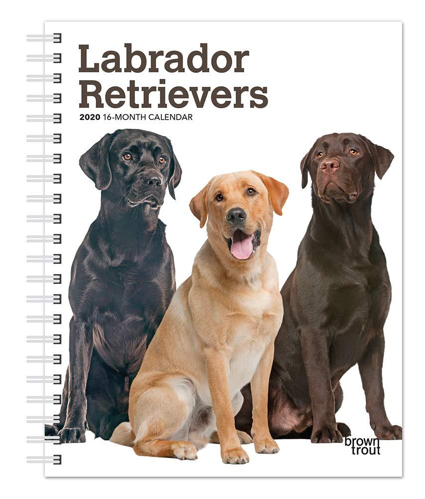 Labrador Retrievers 2020 6 x 7.75 Inch Weekly Engagement ...