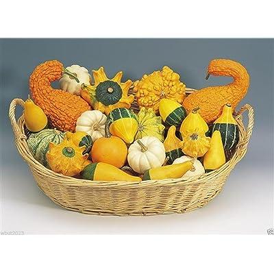 Organic Non-gmo Ornamental Gourd Mix 25 Seeds - Open-pollinated (Small Mixed) : Garden & Outdoor