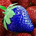 100pcs Blue delicious strawberry seeds exotic seeds vegetable fruit seeds