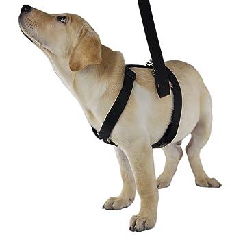 GoldWorld H Shape Nylon Out Door Dog Harness and Leash(Black,M ...
