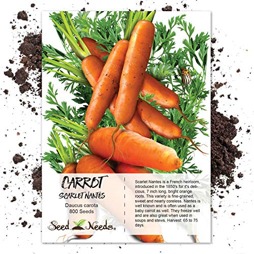 Package of 800 Seeds, Scarlet Nantes Carrot (Daucus carota) Non-GMO Seeds by Seed Needs
