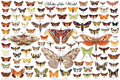 Laminated Moths of the World Educational Science Chart Poste