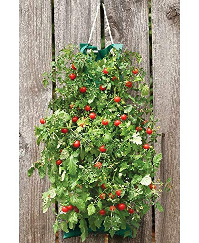 - The Lakeside Collection Hanging Edible Garden Kit - Tomatoes