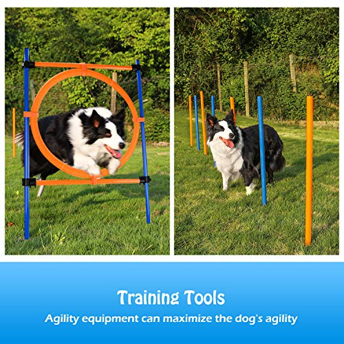 Dog agility obstacle course