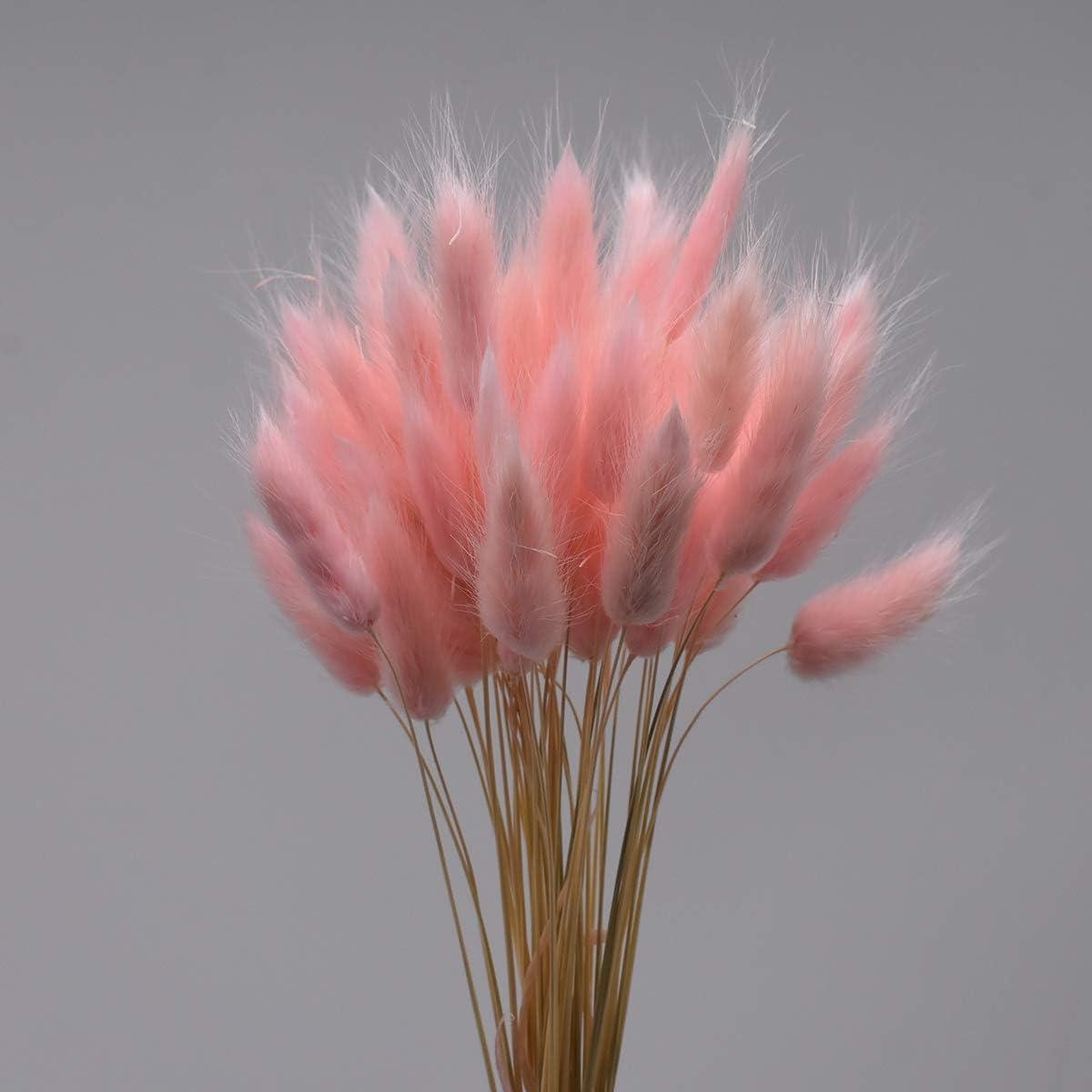 100Pcs Lagurus Ovatus,Naturally Dry Pampas Grass,Rabbit Tail Dried Flowers, Flower Arrangement Wedding Home Decoration(Pink)