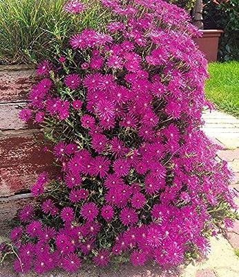 BALDUR-Garten Cooperi- Pérgola para jardín (3 plantas, para invierno): Amazon.es: Jardín