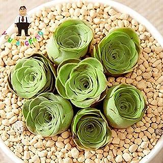 Pinkdose 200pcs mix Lithops piante piante grasse rare Ass piante da fiore Pseudotruncatella Living Stone mini giardino di piante bonsai: Nero