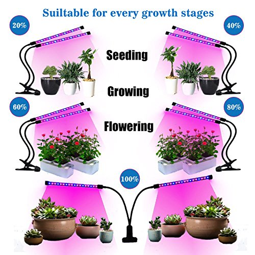 12W Dual Head Timing Grow Lamp, 36 LED Chips with Red/Blue Spectrum for Indoor Plants, Adjustable Gooseneck, 3/6/12H Timer, 5 Dimmable Levels for potted plants, flowering plants, foliage, and succulen by Tomus-UNI (Image #5)