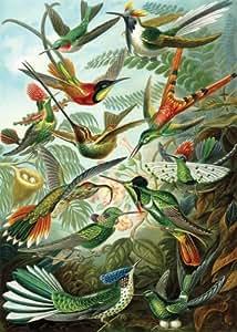 Artifact Puzzles - Haeckel Hummingbirds Wooden Jigsaw Puzzle
