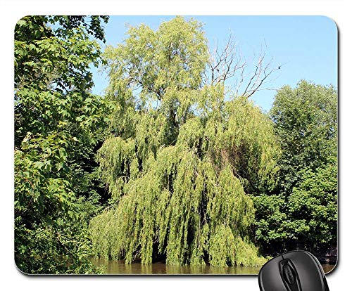 Mouse Pad - Weeping Willow Graze Green Spring Nature Salix