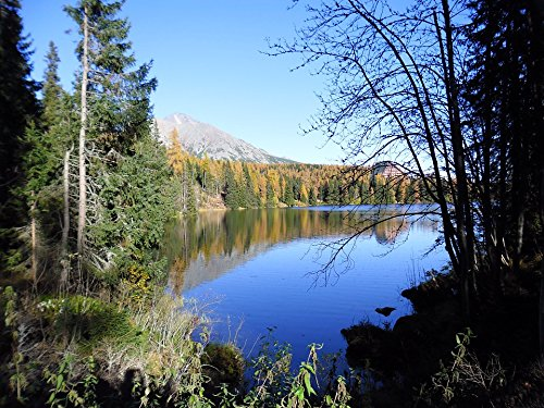 ted Poster Forest Lake Lomnic Tatra Mountains Poster Print 24 x 36 ()