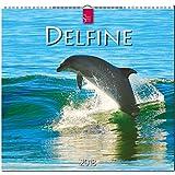 DELFINE: Original Stürtz-Kalender 2018 - Mittelformat-Kalender 33 x 31 cm