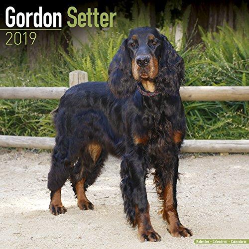 Gordon Setter Calendar - Dog Breed Calendars - 2018-2019 Wall Calendars - 16 Month by Avonside