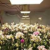 Grow Lights - for Hydroponic and Greenhouse Plant
