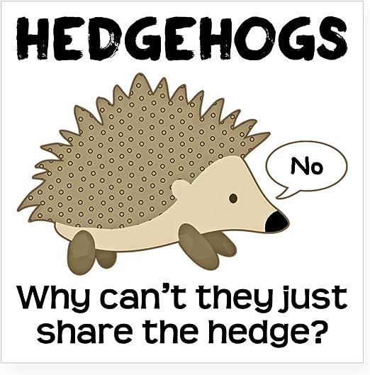 Cute Hedgehog Car Bumper Sticker Decal 3/'/' or 5/'/'