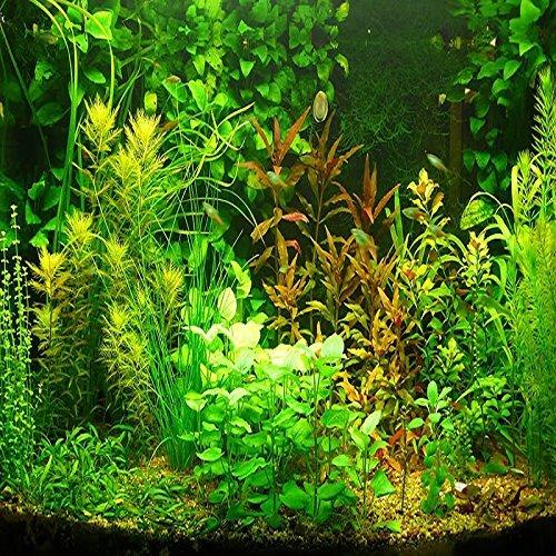 (AGS2000 *Ambizu*) New 1000+1000pcs Aquarium Grass Seeds Water Aquatic Plant Seeds (Mix Included 15 Kinds)