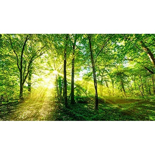 Azutura Green Trees Wall Mural Forest Nature Photo Wallpaper Living Room  Bedroom Decor Available In 8