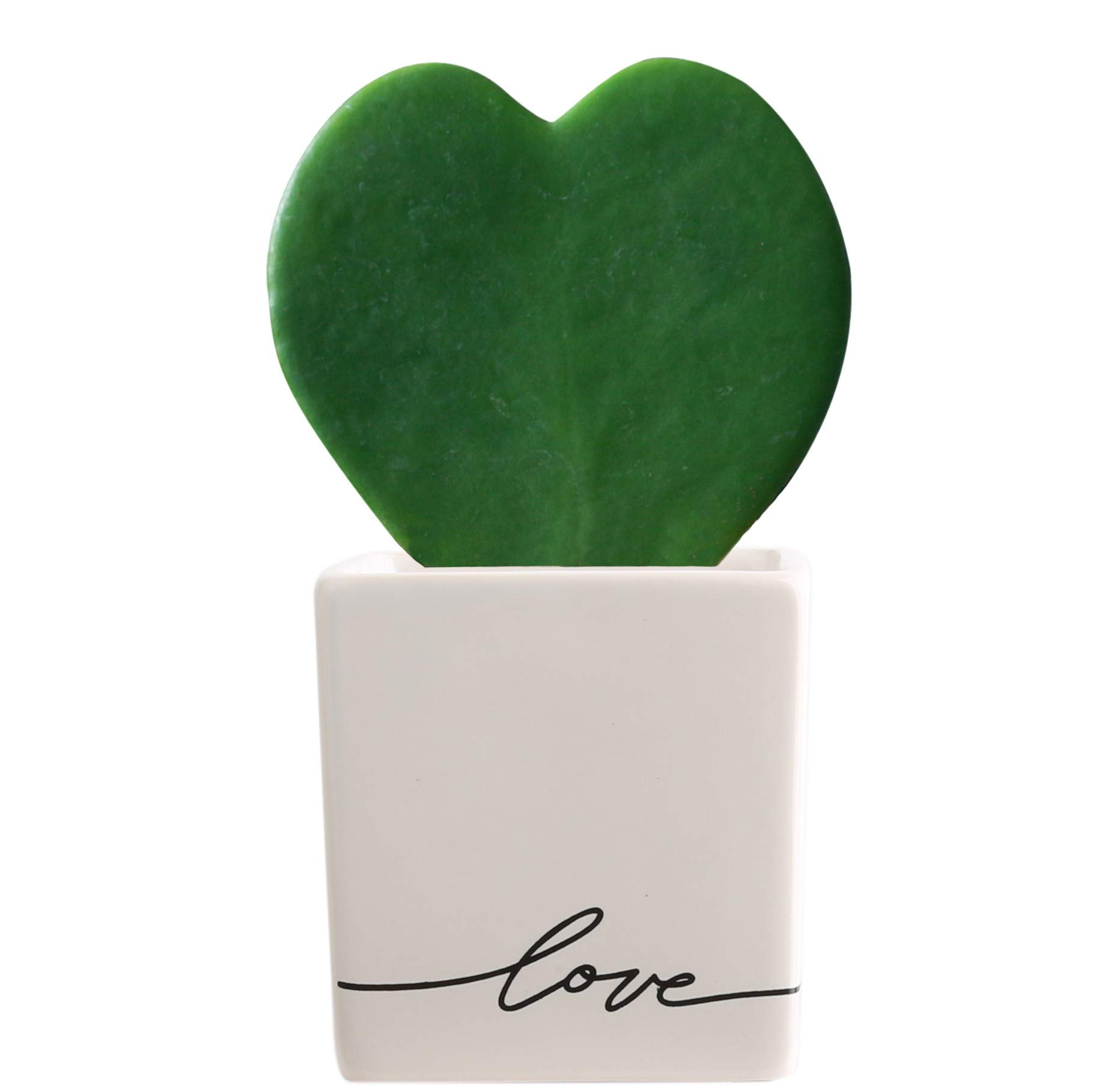 Costa Farms Live Hoya Heart, Succulent-Like Plant, Hoya Kerrii, in Love Balloon White Ceramic