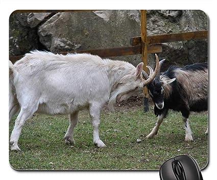 80698917b32a1 Amazon.com : Mouse Pad - Goats Brawlers Animals Goat Fight Nature ...