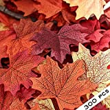 SunAngel Package of 300 Assorted Rich Fall Colored Silk Maple Leaves for Weddings, Events and Decorating