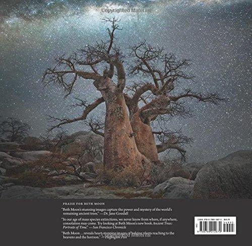 Ancient-Skies-Ancient-Trees